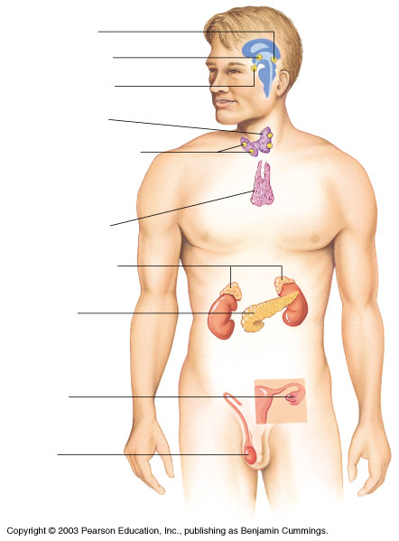 an overview of the lymphatic system and its role and importance to the human body