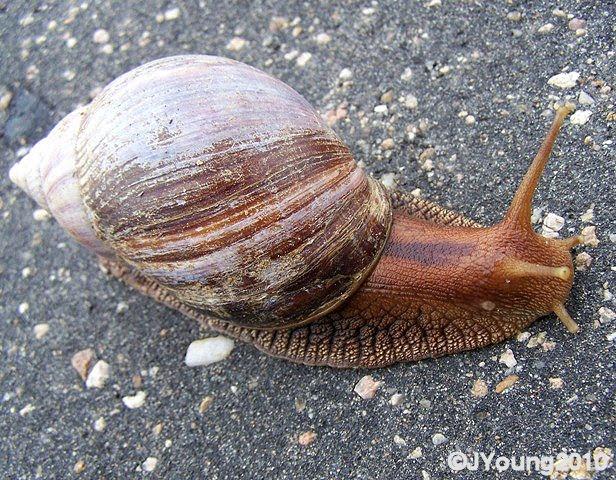 Mollusks Thinglink