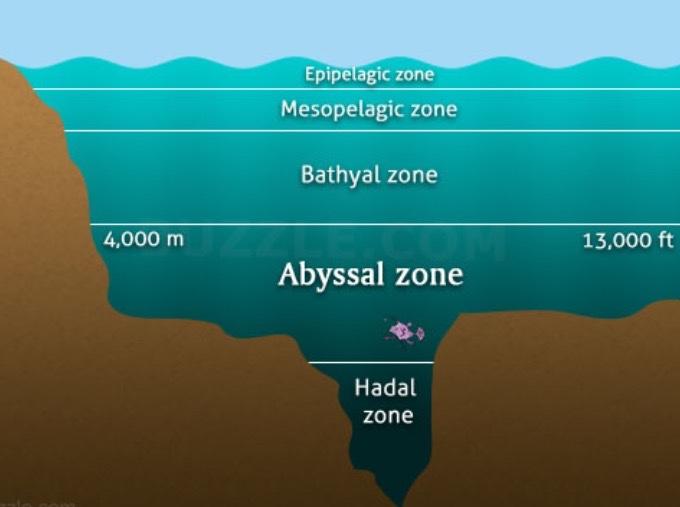 Aubrey & Peyton's Ocean Zones - ThingLink