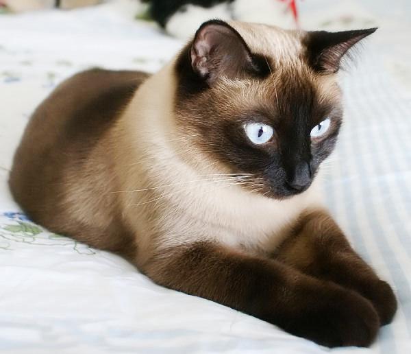 Black Cat Simes