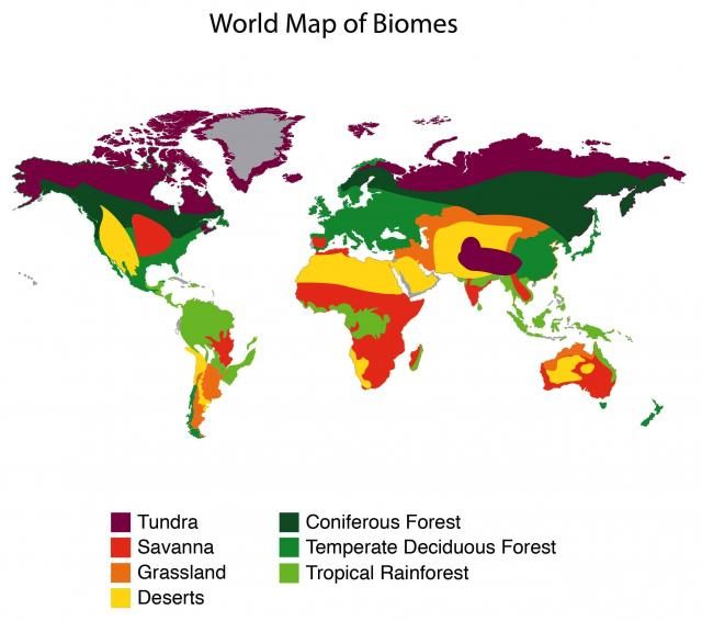 List of synonyms and antonyms of the word 6 land biomes major biomes gumiabroncs Gallery