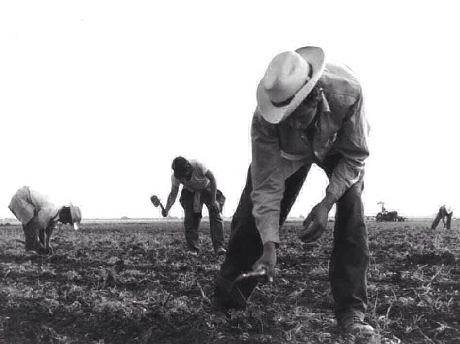 mexican migrant workers essay Forty-two pre-world war ii photographs dorothea lange created for the u large scale agriculture gang labor, mexican and white mid - migrant worker on.