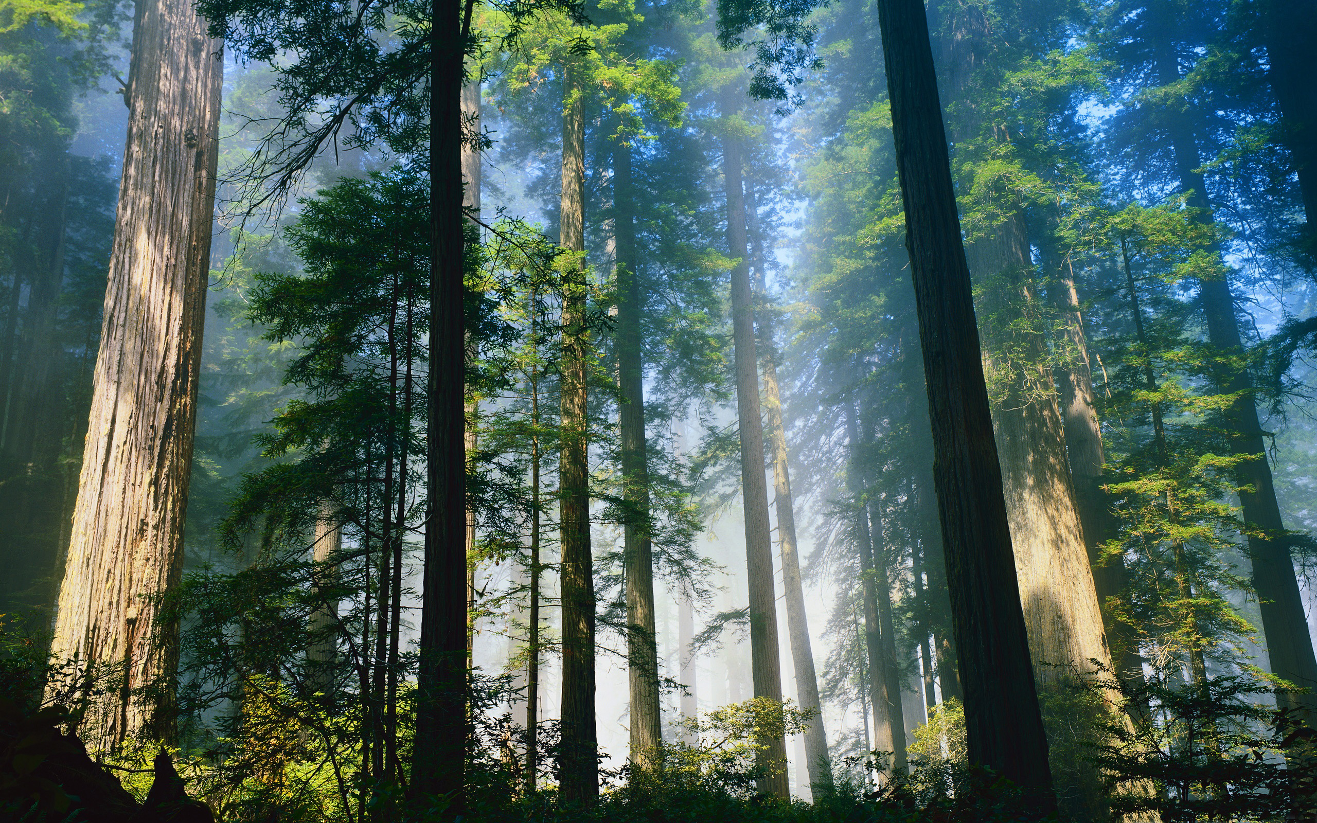 Estudiosingleses a2 redwood national park scenes set on the forest moon endor in star wars episode vi return of the jedi were filmed in the tall trees redwood sciox Choice Image