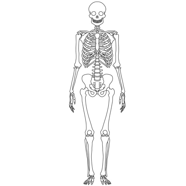human body project: background research - hyunjin seo - thinglink, Skeleton