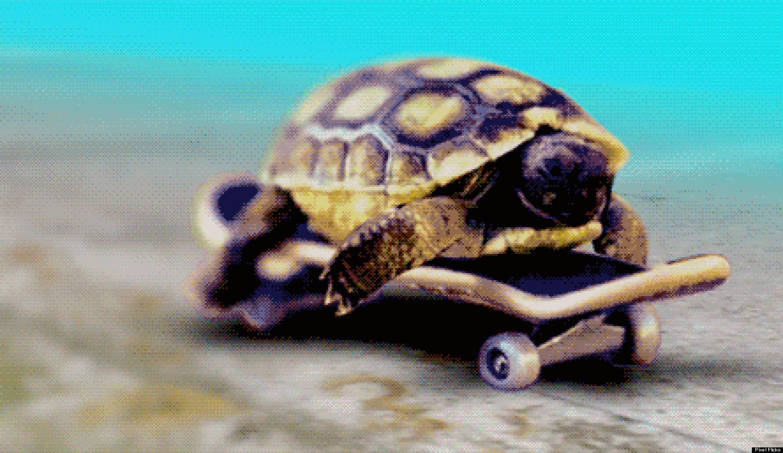 skateboarding baby turtle thinglink
