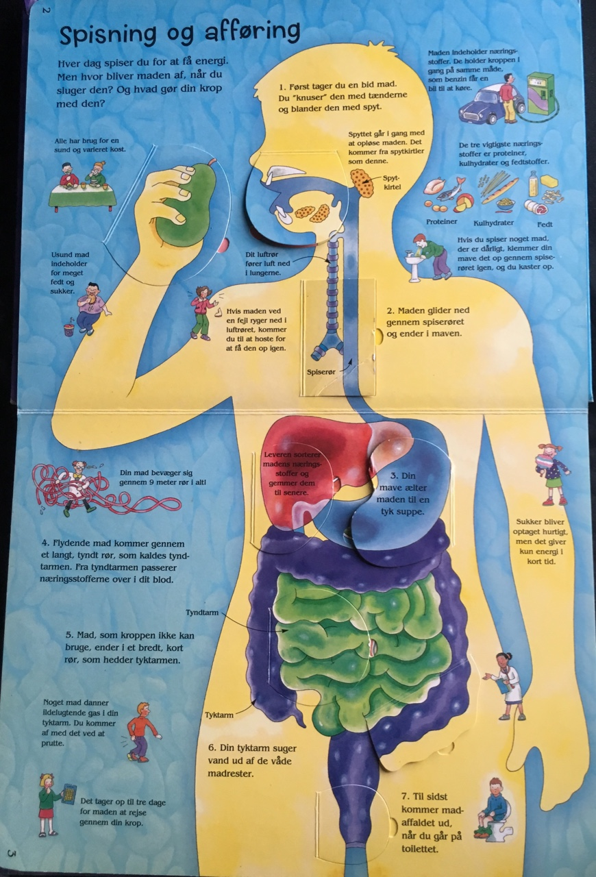 kroppen med organ
