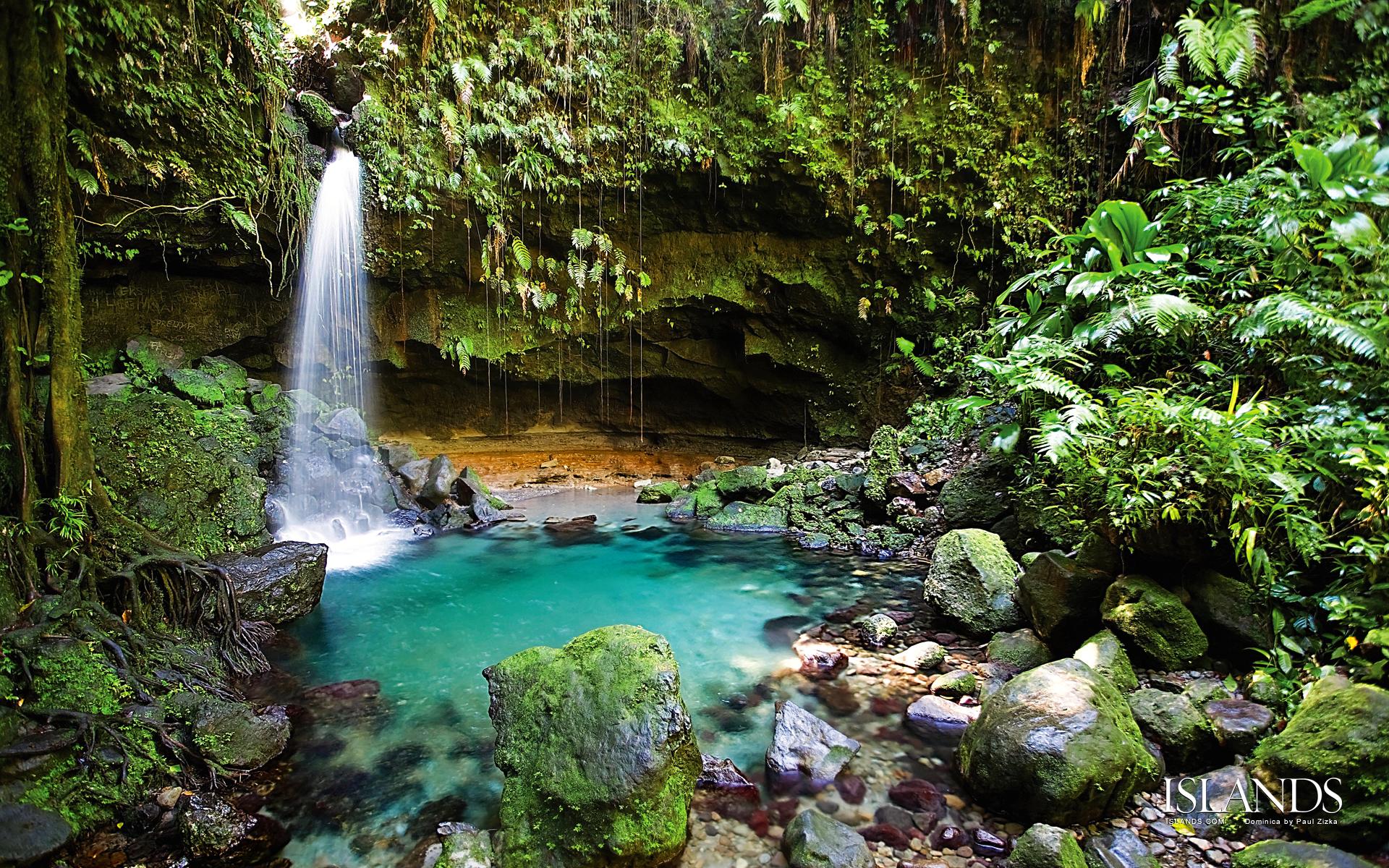 Rain Forest Background Yeterwpartco