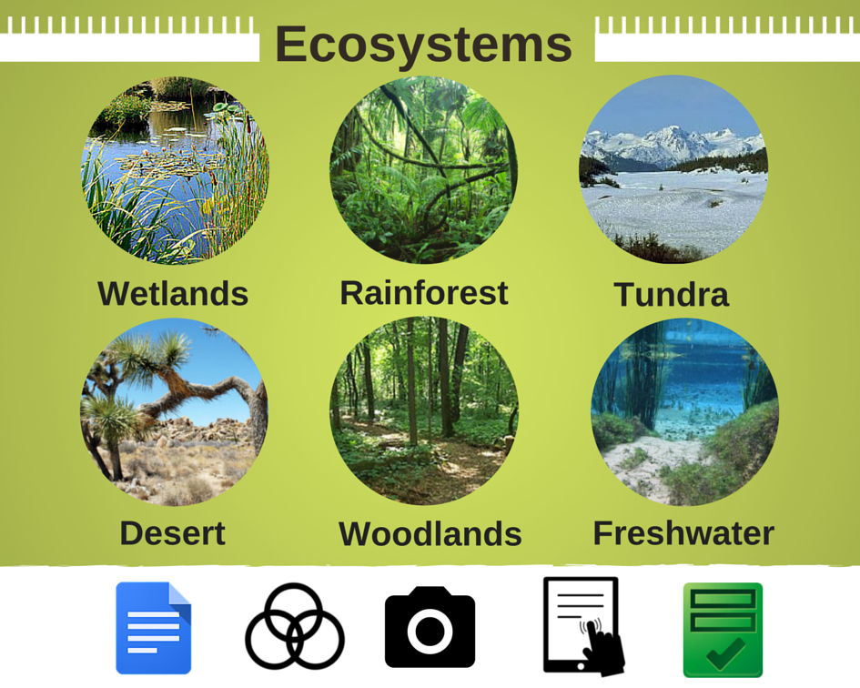 Ecosystems Research Project - ThingLink