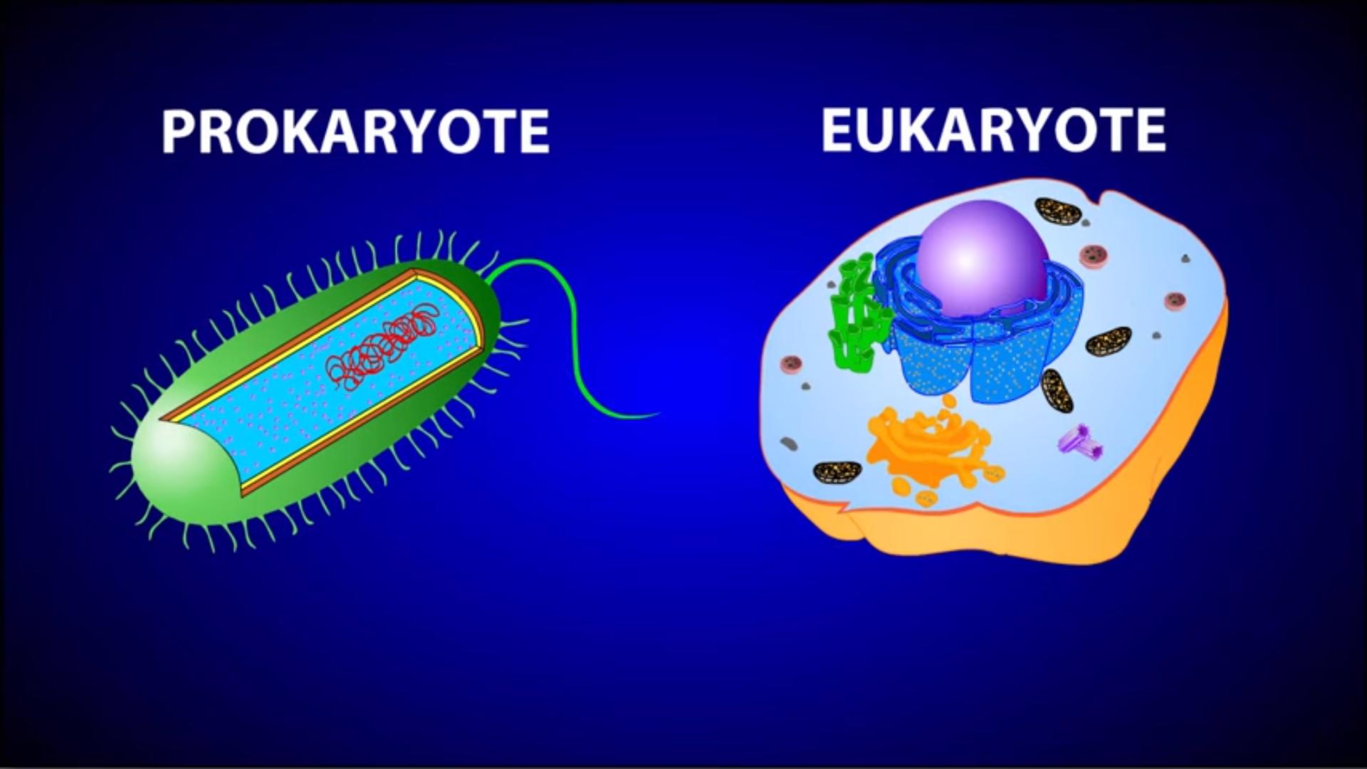 Eukaryotic Cells Venn Diagram Of Viruses Electrical Wiring Labeled Cell Worksheet Prokaryotes Vs Eukaryotes Grass Cytosol And Cytoplasm Structure
