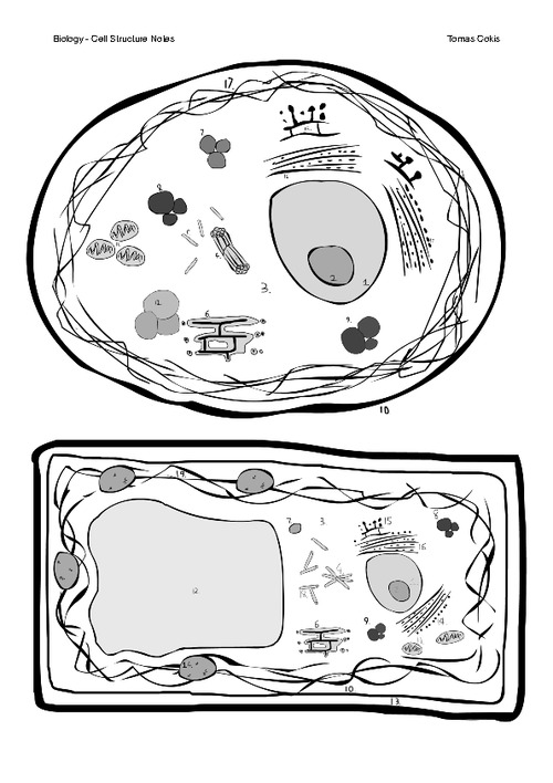 Animal Cell Coloring Page Diagram Without Labels Coloring Page – Cell Membrane Coloring Worksheet