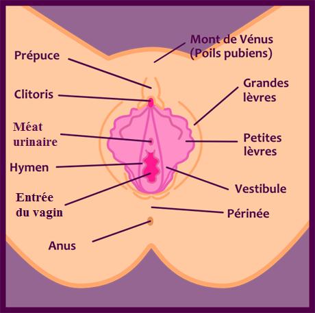 Vagin de femme