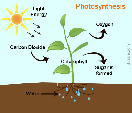 Photosynthesis - ThingLink