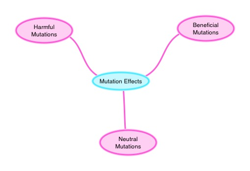 Mutation Concept Map.Mutation Effects Ck 12 Foundation