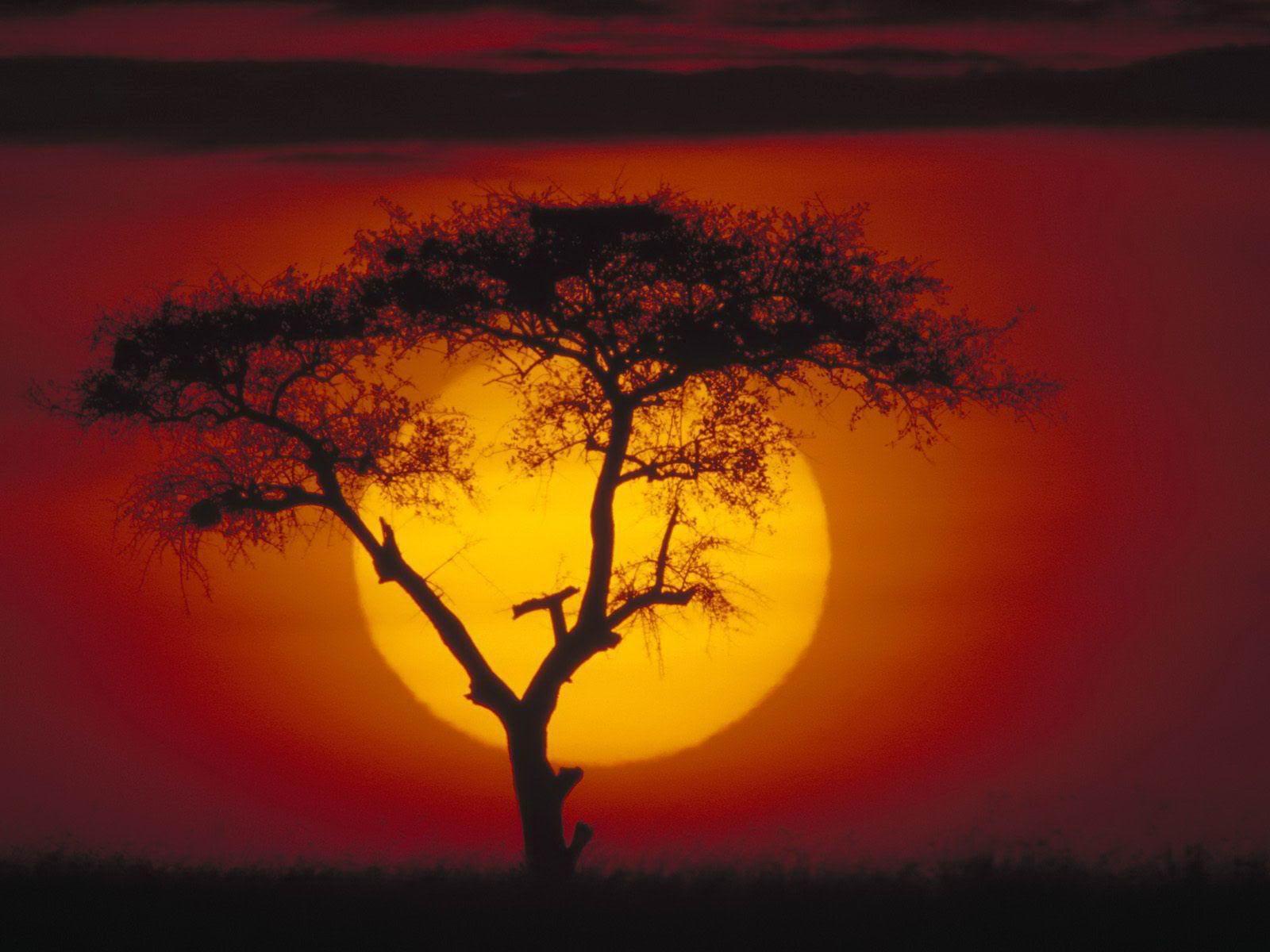 Copper Sun, By Sharon Draper - ThingLink
