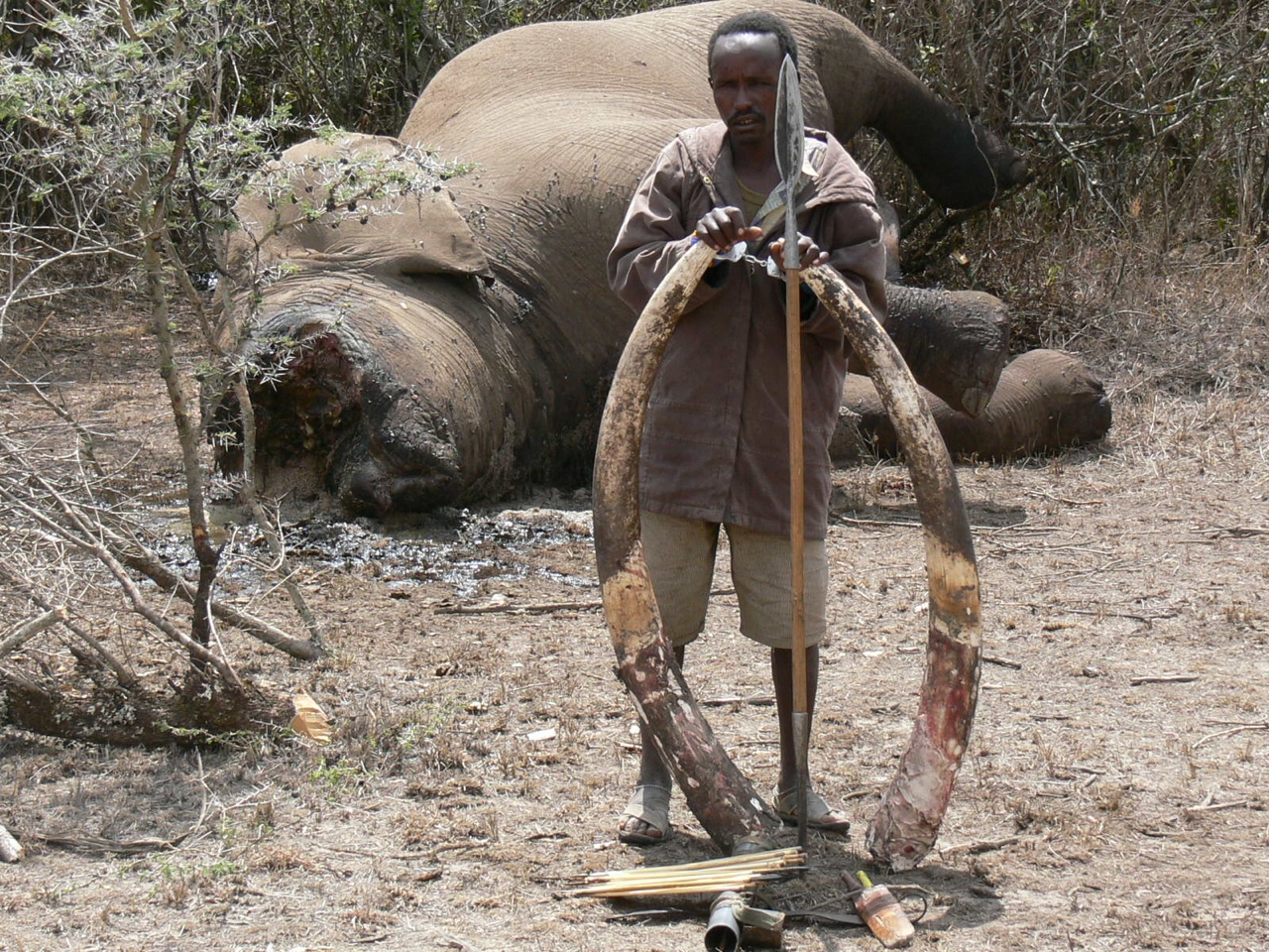 Elephant poaching - ThingLink