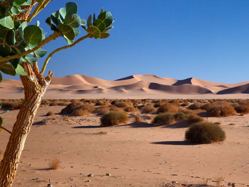 Hot And Dry Desert ThingLink - A hot desert