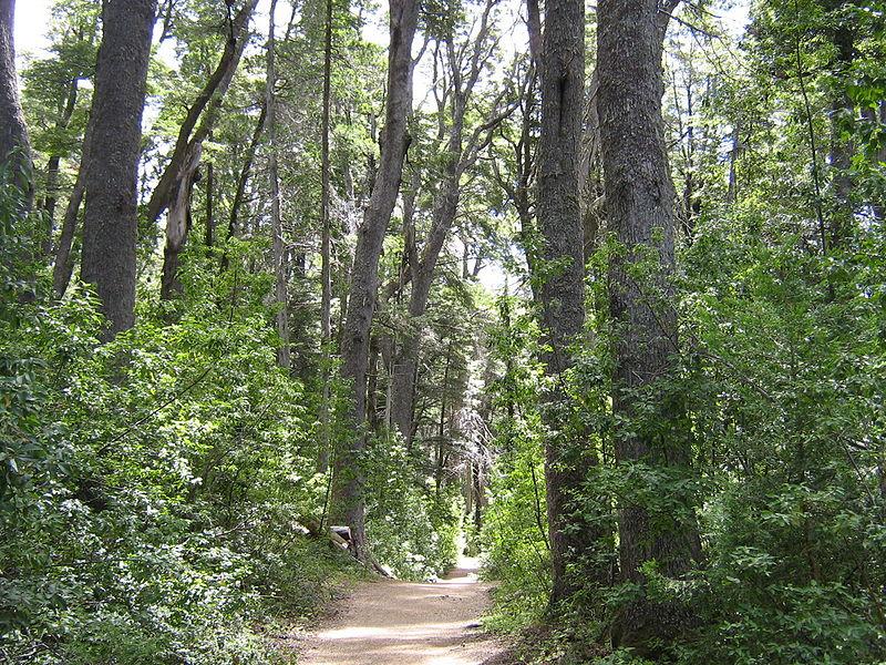 Bioma Bosque Andino Patagonico