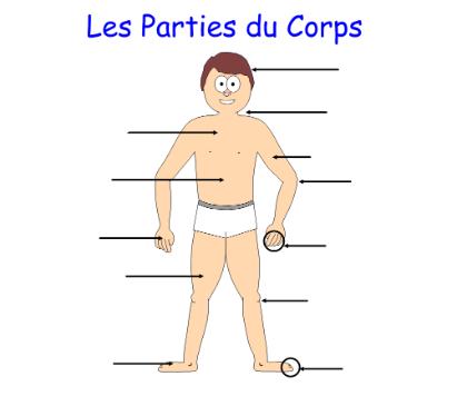 Les Parties Du Corps Par Student French Name Last