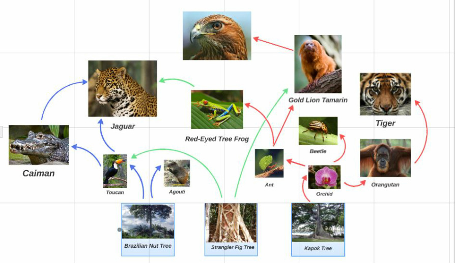 Tropical Rainforest Food Web - ThingLink