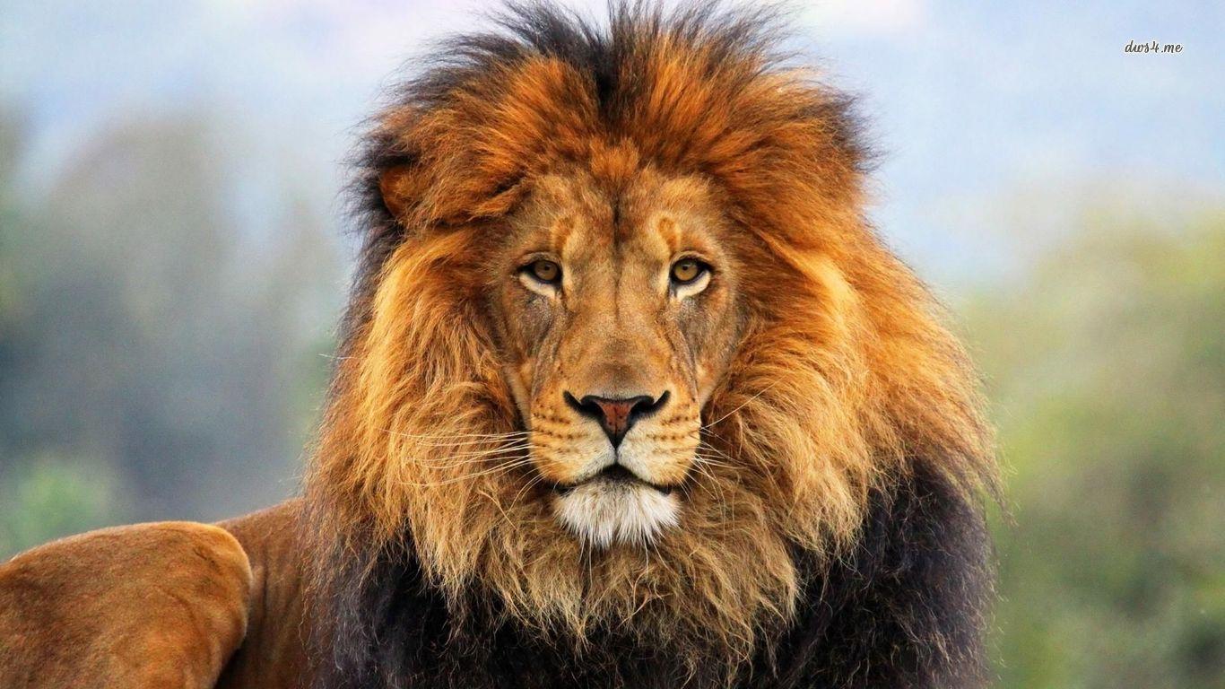 lion thinglink