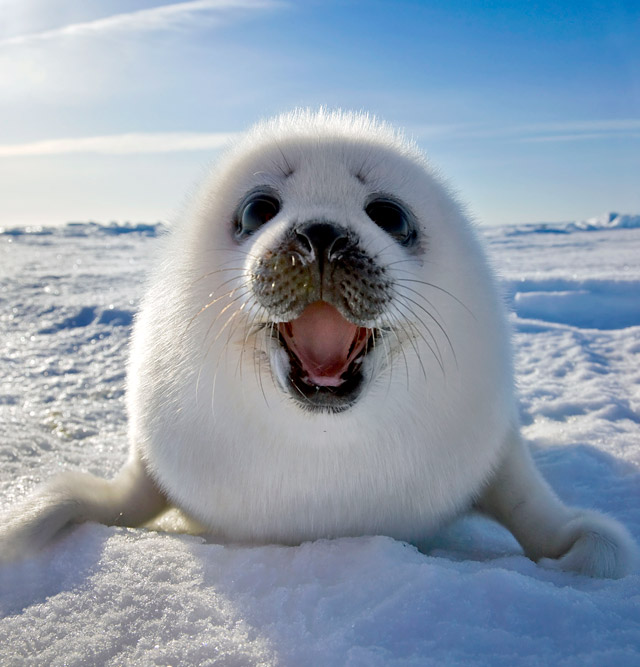 Antarctic Seals ThingLink