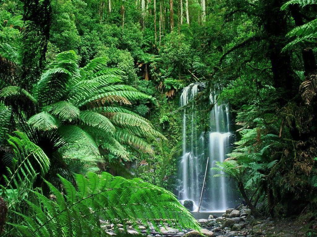 Tropical Rainforest (Biome Project) - ThingLink