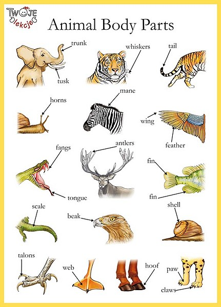 Animal Parts of Body Animal Body Parts Thinglink