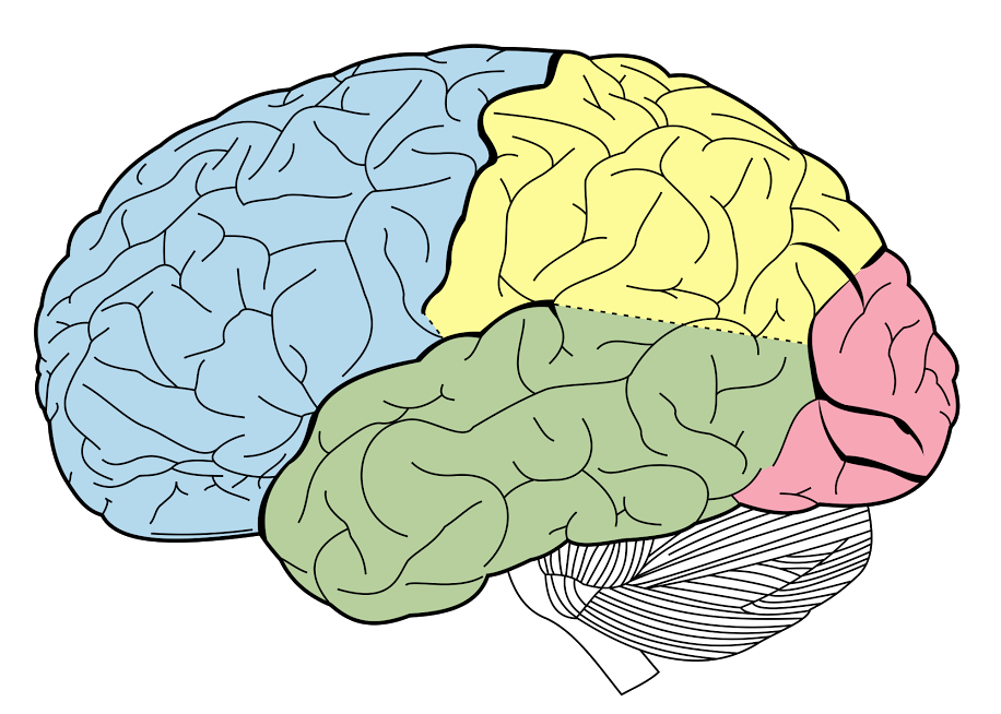 what determines intelligence
