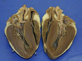 The sheep heart by shelby and michelle thinglink ccuart Choice Image