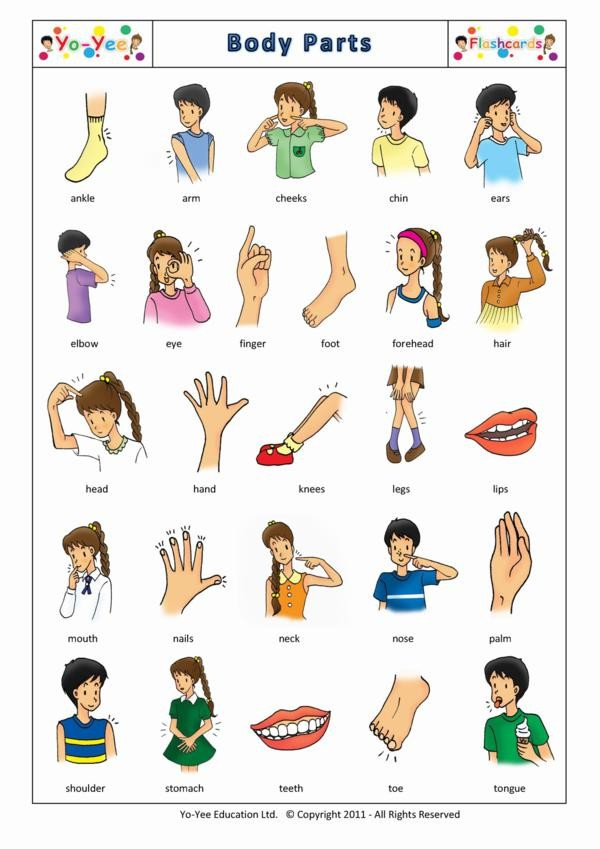 Brays Interactive Body Parts for Kids