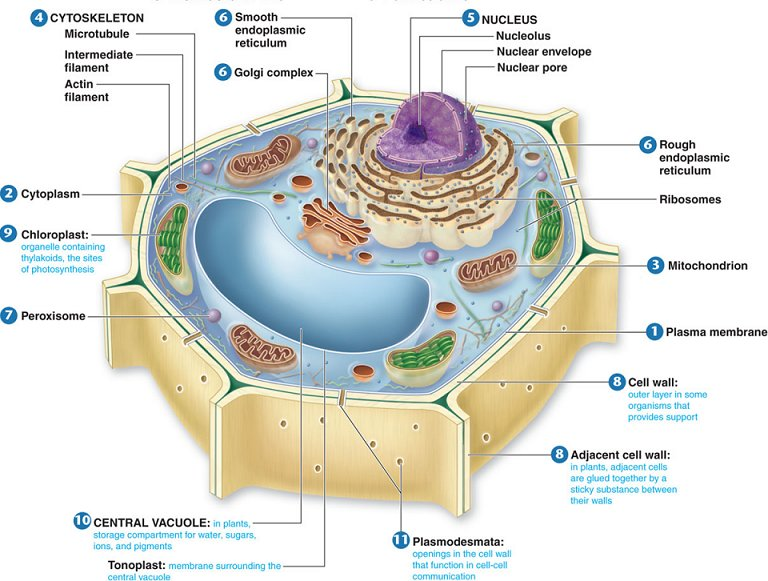 Plant Cell Thinglink