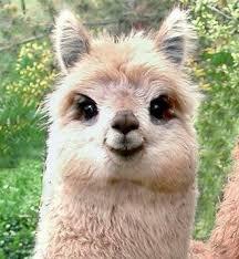 Happy Llama Sad Mentally Disturbed Super L
