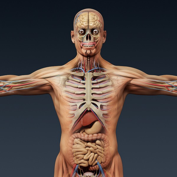 Systems of the Human Body - ThingLink