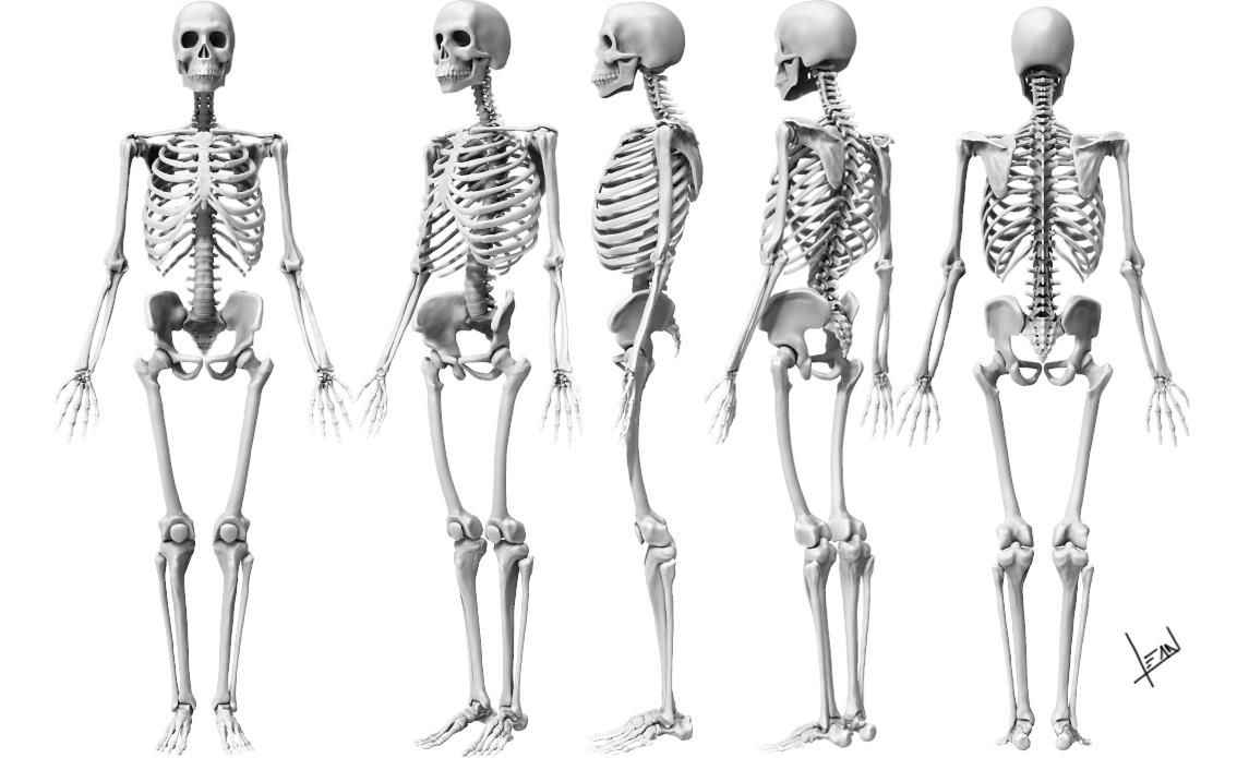Ashoks Skeleton