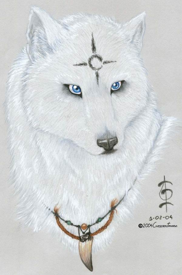 How Pretty Is This Wolf I Mean Like Really She Is Amazing