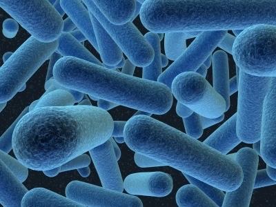 Archaea, Domain; Archaea, Kingdom; Euryarchaeota, Phylum;...