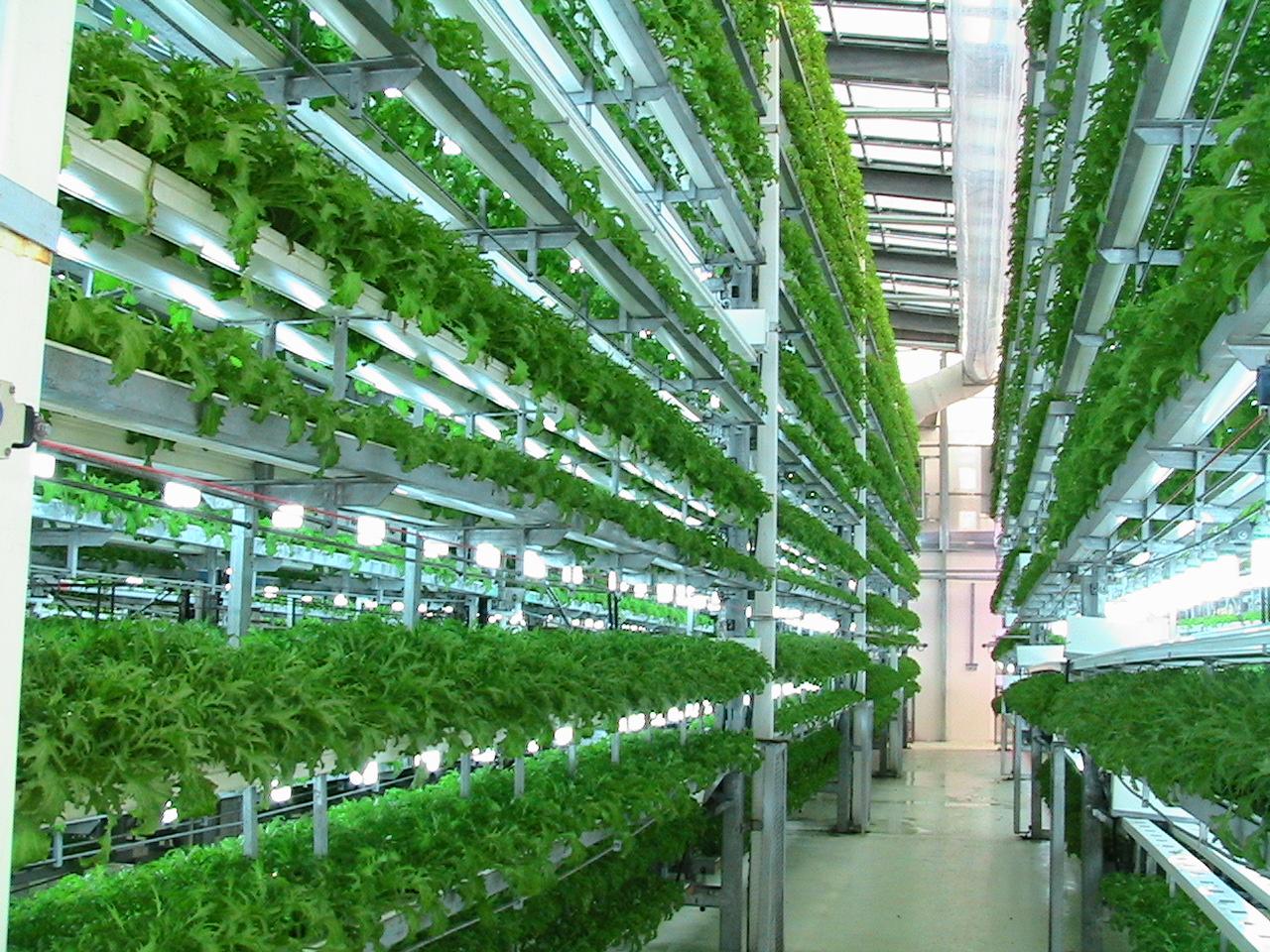Как выращивать хлорелла в домашних условиях