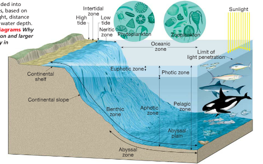 The Three Zones That The Ocean Is Split Into For Marine Life